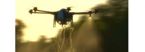China : Infractorii folosesc drone pentru a infesta porcii