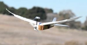 PigeonBot, o dronă care zboară la fel ca un porumbel