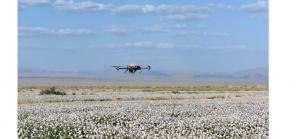 Defolierea bumbacului cu ajutorul dronelor (UAS)