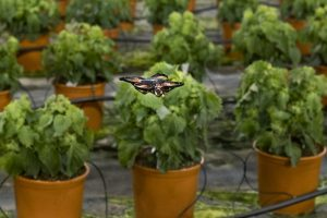 Drone (UAV) și protejarea plantelor cultivate în sere (1)