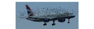 """UAV în """"luptă"""" cu păsări care au cuib lângă aeroporturi"""
